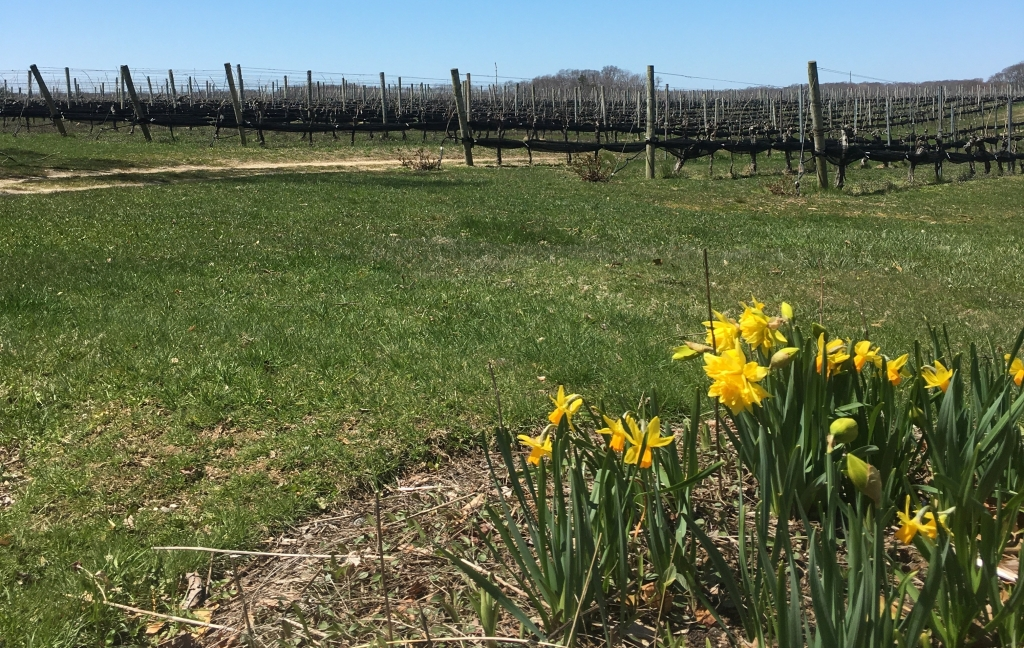Wining in Southampton: Paumanok Vineyards & Jamesport Vineyards | The Hamptons | Wine Travel | AGBHOW | A Great Big Hunk of World