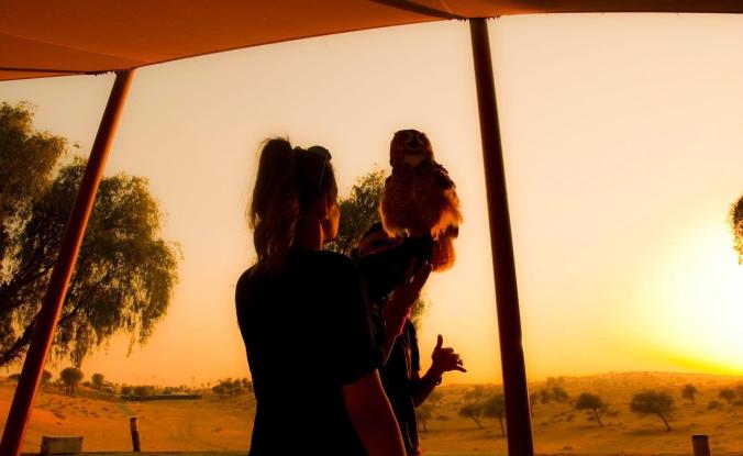 What to Do When Visiting Ras Al Khaimah | Ritz Carlton Al Wadi Desert, Falcon Show | United Arab Emirates | www.agreatbighunkofworld.com | A Great Big Hunk of World | #AGBHOW