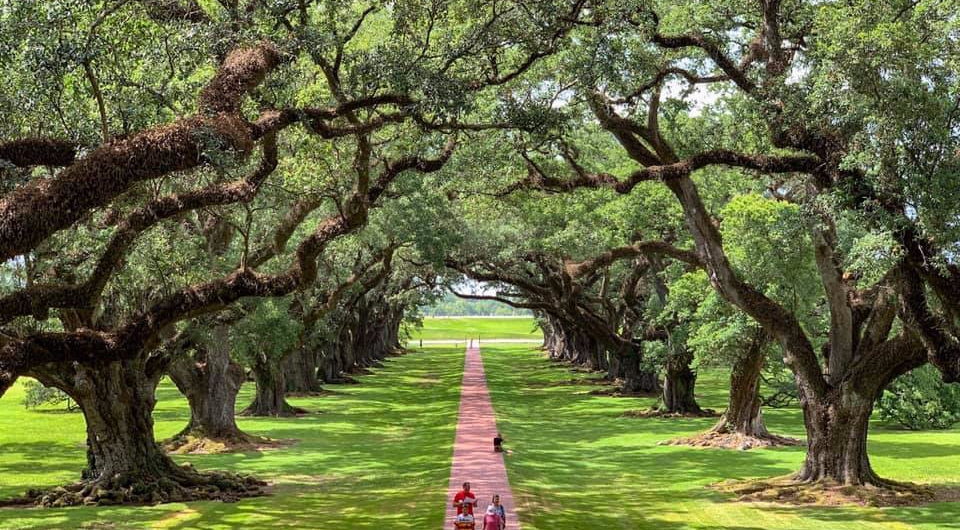Two Days in New Orleans | United States | A Great Big Hunk of World | www.agreatbighunkofworld.com | #agbhow | Oak Alley Plantation Tour