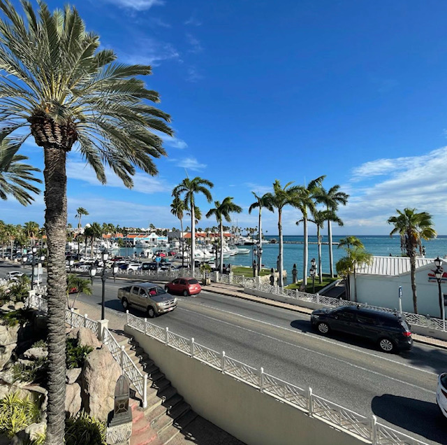 A large palm tree stands to the left, to the right is the passing road in front of the resort with a few cars, behind the road is the marina, blue water and parked boats.